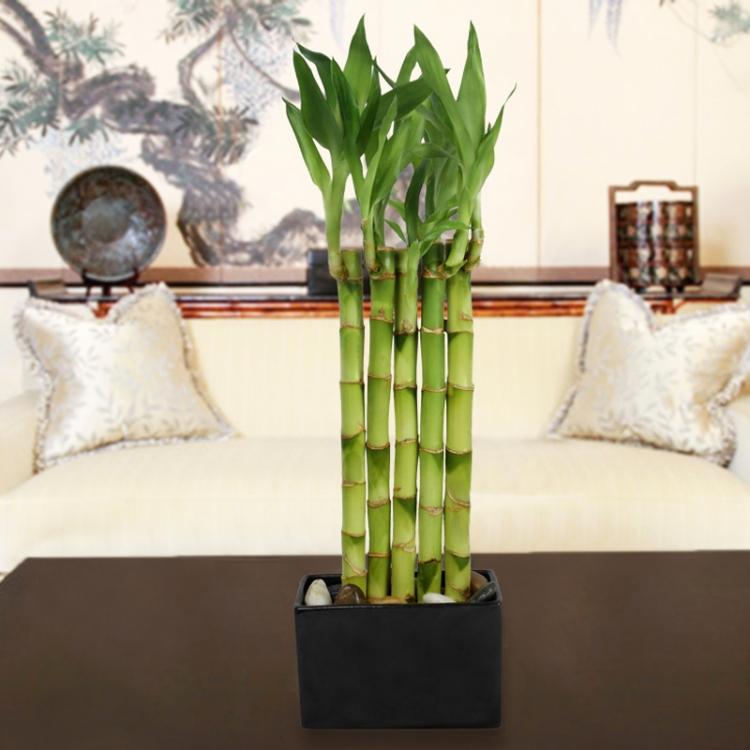 декоративный бамбук фото тематика интерьере