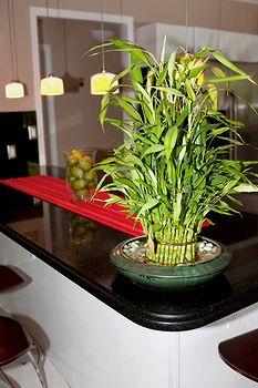 Бамбук дома